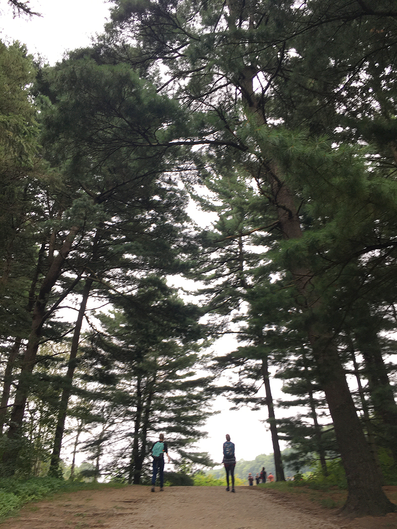 pine forest in the arb