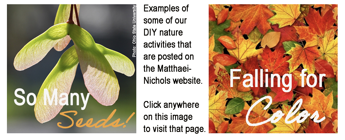 DIY nature activities