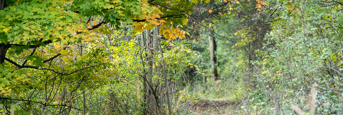 A fall path at Matthaei-John Metzler