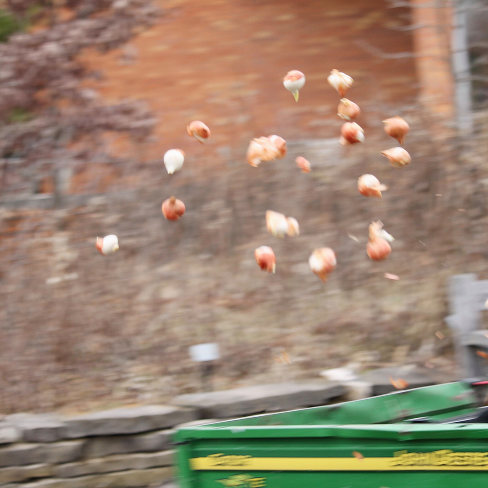 Close up of tossed bulbs
