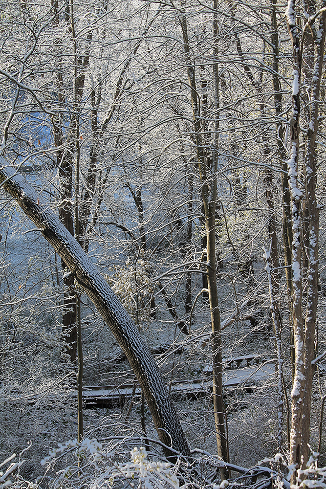 Snow in trees-2