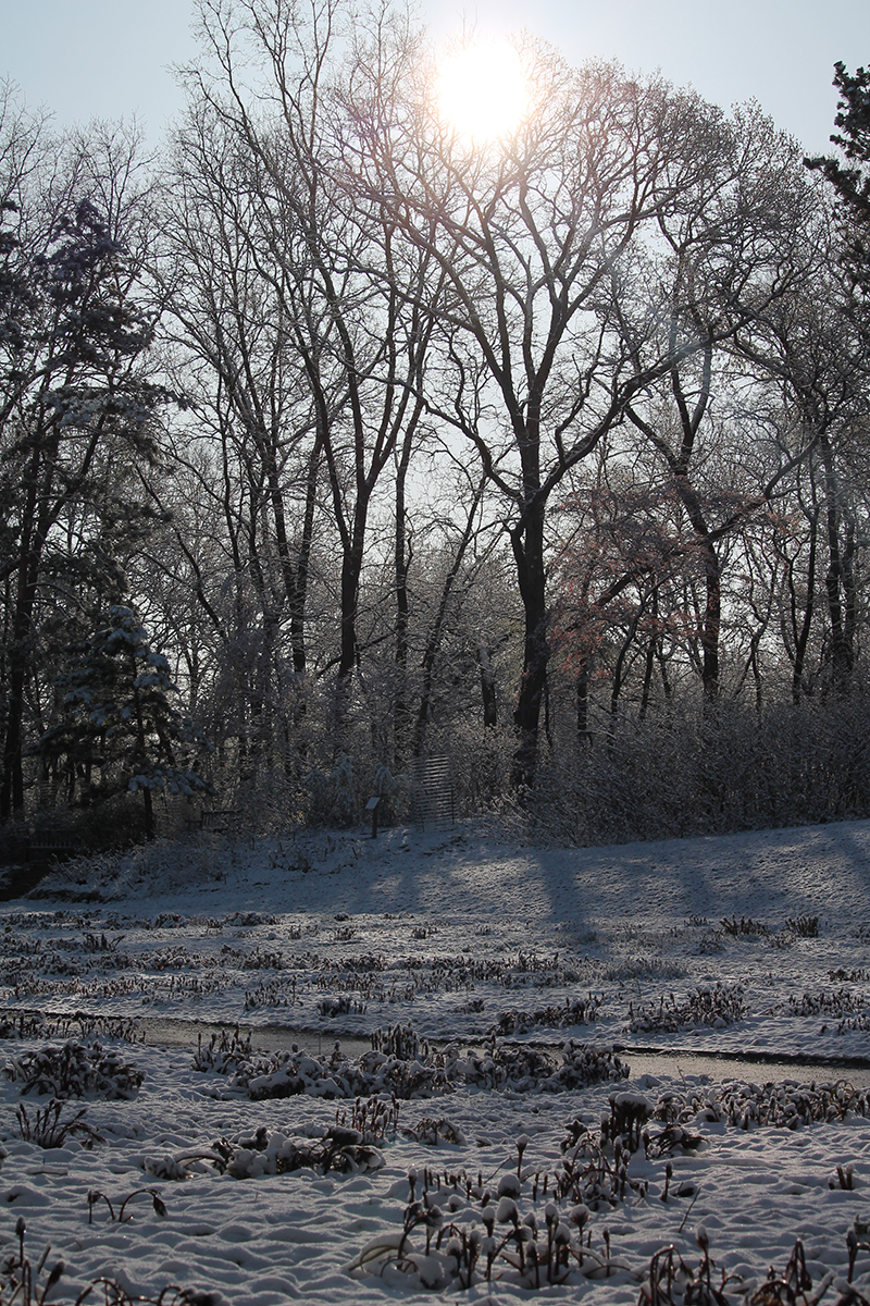 Snow on peony garden