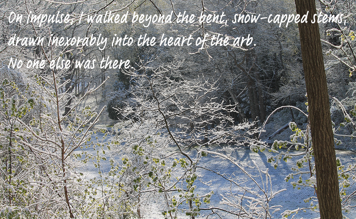 Snowy forest with text over it-2